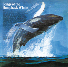 Songs of the Humpback Whale Album