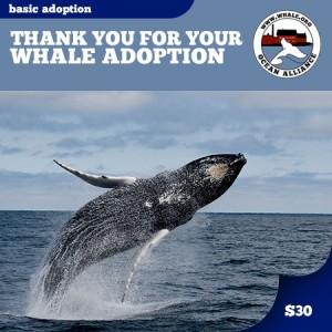 Basic Whale Adoption