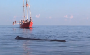 Odyssey with sperm whale in the Gulf