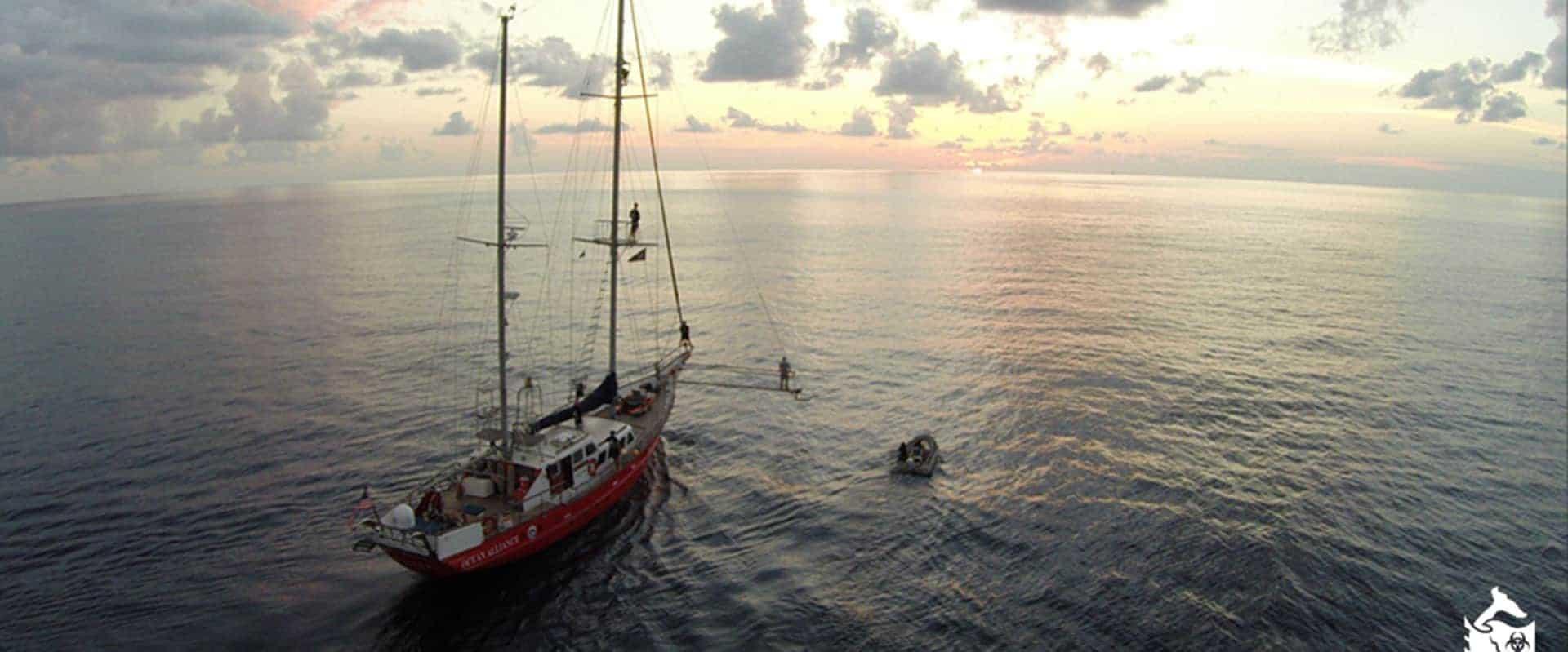 Ocean Alliance Banner