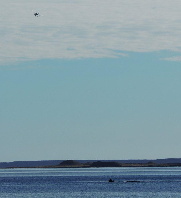 Península Valdés, Patagonia,